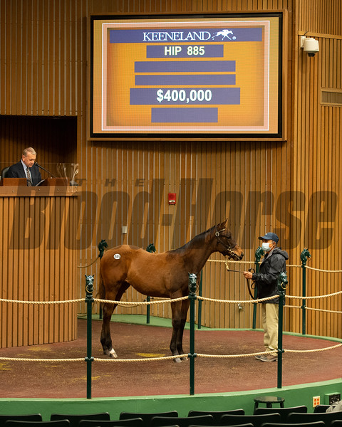 Hip 885 filly by More Than Ready out of Verdad from Brookdale<br /> Sales horses at the Keeneland November Sale at Keeneland in Lexington, Ky. on November 11, 2020.