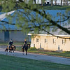 Caption: walking to barn after training<br /> Behind the Scenes at Keeneland during Covid19 virus and the people, horses, and essentials needed to take care of race horses on April 2, 2020 Keeneland in Lexington, KY.
