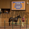 Hip 2981 filly by Street Boss out of Hinder from Columbiana Farm, agent for Arizona Racetrack school.<br /> at Keeneland September sale yearlings in Lexington, KY on September 22, 2020.