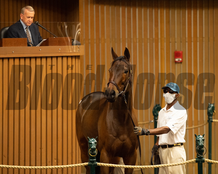 Hip 81 Oleksandra from Bluewater<br /> Sales horses at the Keeneland November Sale at Keeneland in Lexington, Ky. on November 9, 2020.