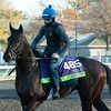 Siskin<br /> Breeders' Cup horses at Keeneland in Lexington, Ky. on November 2, 2020.