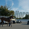 Scene. Hip 2580 leaves the sales grounds to van home.<br /> at Keeneland September sale yearlings in Lexington, KY on September 22, 2020.