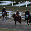 Members of the European contingent walk to the training track for a gallop at Keeneland Race Course Monday Nov. 2 2020 in Lexington, KY.  Photo by Skip Dickstein