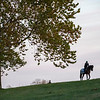 A Breeders' Cup entrant walks along the hill as he returns from a gallop on the training track at Keeneland Race Course Monday Nov. 2 2020 in Lexington, KY.  Photo by Skip Dickstein