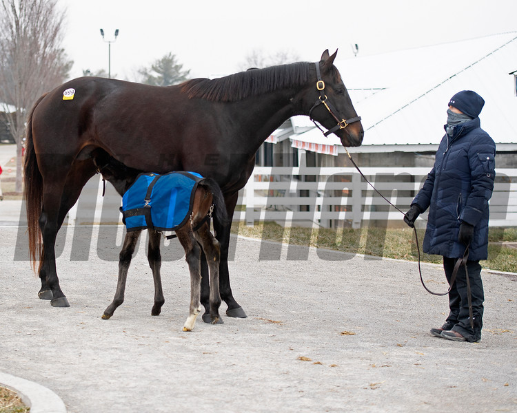 Hip 699 Lili Von Shtupp with her Dialed In filly born Jan. 10 at the Four Star Sales consignment at Keeneland.<br /> Keeneland January Sales at Keeneland near Lexington, Ky., on Jan. 12, 2021.