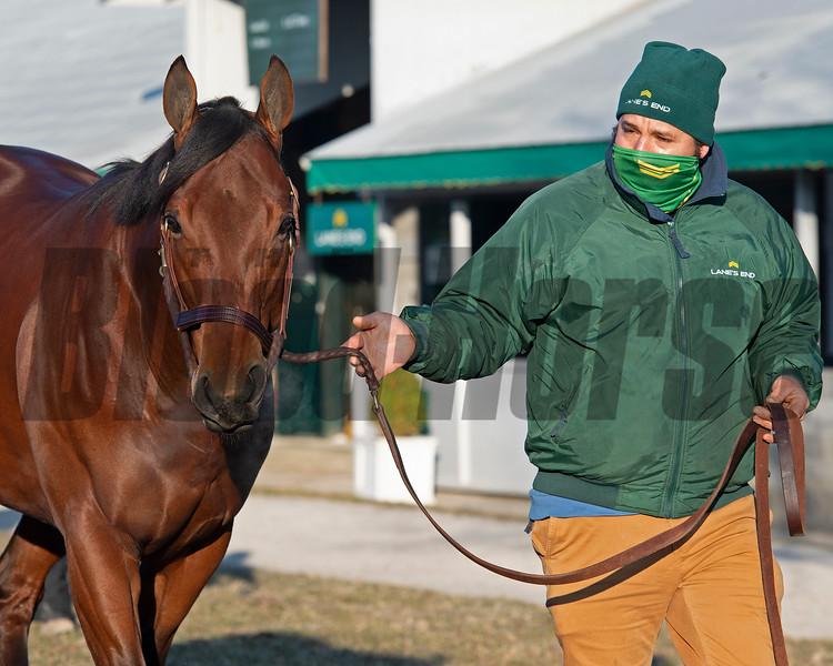 Hip 1563 Turned Aside showing during the Pompa dispersal through Lane's End.<br /> Keeneland January Sales at Keeneland near Lexington, Ky., on Jan. 13, 2021.