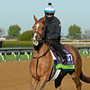Uni<br /> Breeders' Cup horses at Keeneland in Lexington, Ky. on November 4, 2020.