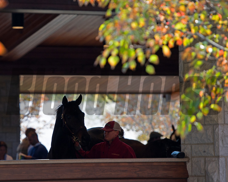 Beau Lane with J.B. and Michael Orem at the Beau Lane consignment plus sales scenes.<br /> Keeneland November Sales on Nov. 15, 2016, in Lexington, Ky.