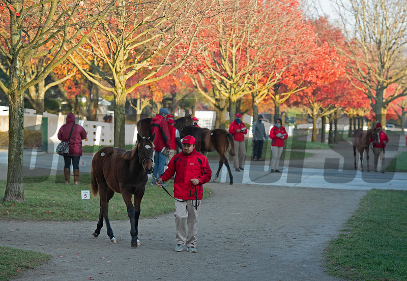 Hip 1652, weanlings at Eaton Sales<br /> Sales horses at the Keeneland November Sale at Keeneland in Lexington, Ky. on November 12, 2020.