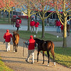 WEanlings are walked in the early morning light at Eaton Sales<br /> Sales horses at the Keeneland November Sale at Keeneland in Lexington, Ky. on November 12, 2020.