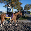 Dunbar Road heads to the track for her morning exercise at Keeneland Race Course Wednesday Nov. 4 2020 in Lexington, KY.  Photo by Skip Dickstein