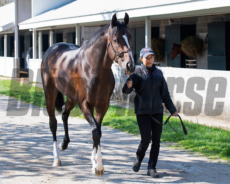 Mighty Heart, Canada's Horse of the Year,  walking with Melanie Pinto at Keeneland near Lexington, Ky., on April 16, 2021. .