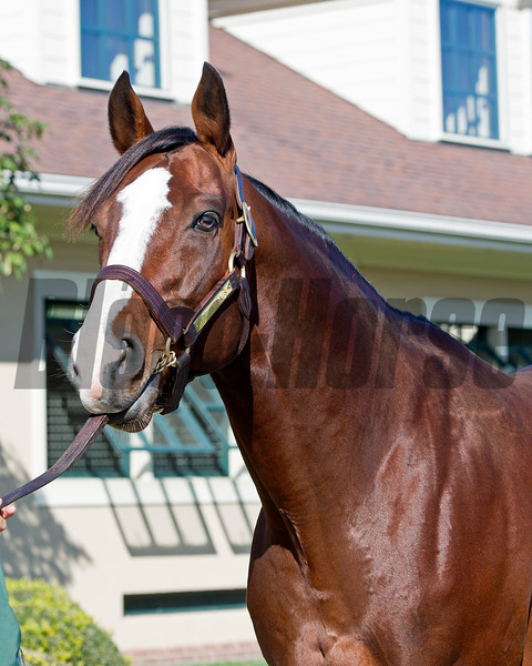 Union Rags<br /> James B. Keogh, plus Lane's End stallions and Keeneland ring<br /> Keeneland November Sales on Nov. 11, 2016, in Lexington, Ky.