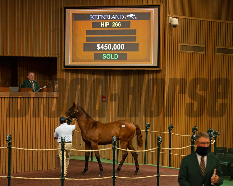 Hip 266 colt by Mastery out of Go Go Dana from Threave Main and breeders Eric Buckley and Lee MacMillan<br /> Sales horses at the Keeneland November Sale at Keeneland in Lexington, Ky. on November 10, 2020.