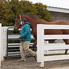 Mare arrives<br /> Keeneland January Sales at Keeneland near Lexington, Ky., on Jan. 9, 2021.