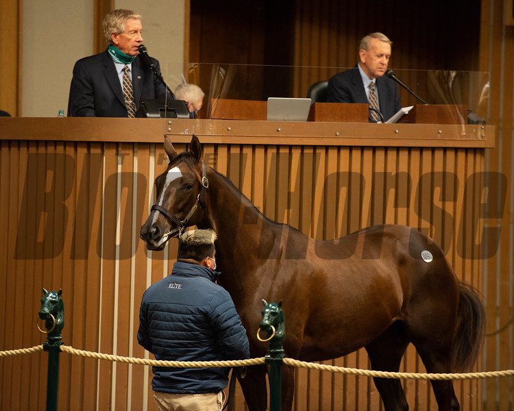 Hip 3091 Moral Reasoning form ELiTE Sales<br /> Sales horses at the Keeneland November Sale at Keeneland in Lexington, Ky. on November 17, 2020.