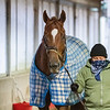 Swiss Skydiver at the barn after her morning gallop at Keeneland Race Course Tuesday Nov. 3 2020 in Lexington, KY.  Photo by Skip Dickstein