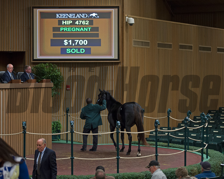 final hip 4762 into the sales ring brings $1700 from James Lynch<br /> Keeneland November Sales on Nov. 20, 2016, in Lexington, Ky.