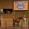 Hip 880 colt by Into Mischief out of Bella Jolie from Taylor Made/Stonestreet<br /> at Keeneland September sale yearlings in Lexington, KY on September 16, 2020.