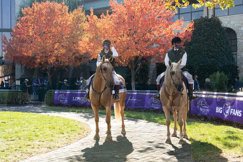 Ponies in paddock scene at Keeneland in Lexington, Ky. on Nov. 6, 2020.