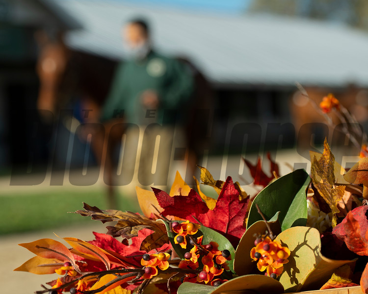 Sales horses at the Keeneland November Sale at Keeneland in Lexington, Ky. on November 10, 2020.