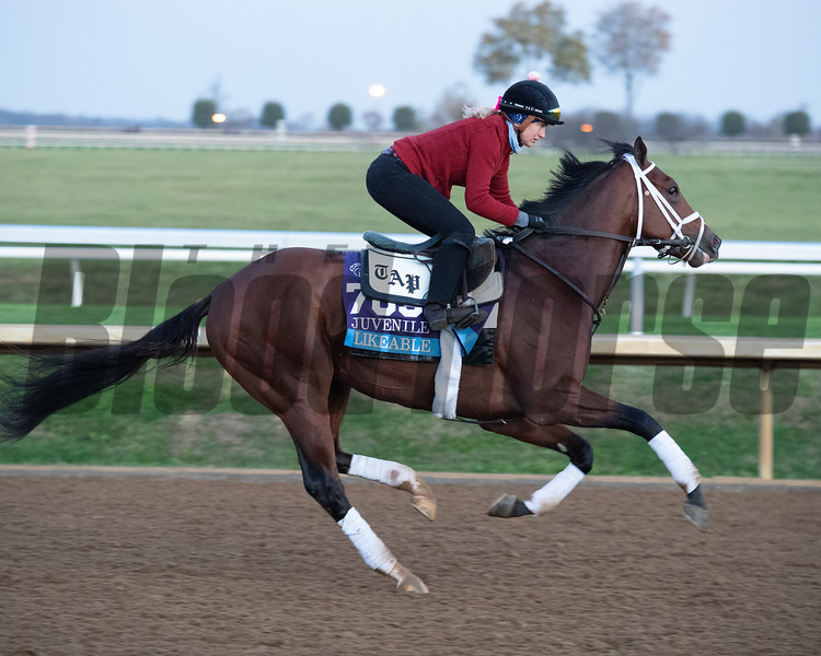 Likeable<br /> Breeders' Cup horses at Keeneland in Lexington, Ky. on November 5, 2020.