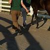 walking a sales horse<br /> Keeneland January Sales at Keeneland near Lexington, Ky., on Jan. 14, 2021.