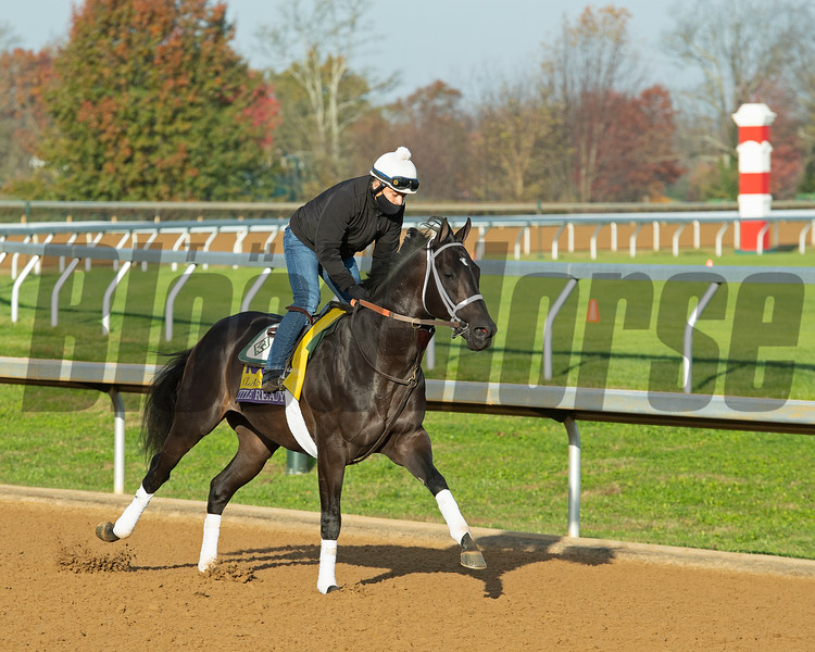 Title Ready<br /> Breeders' Cup horses at Keeneland in Lexington, Ky. on November 5, 2020.