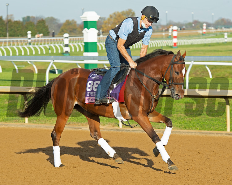 Spanish Loveaffair<br /> Breeders' Cup horses at Keeneland in Lexington, Ky. on November 5, 2020.