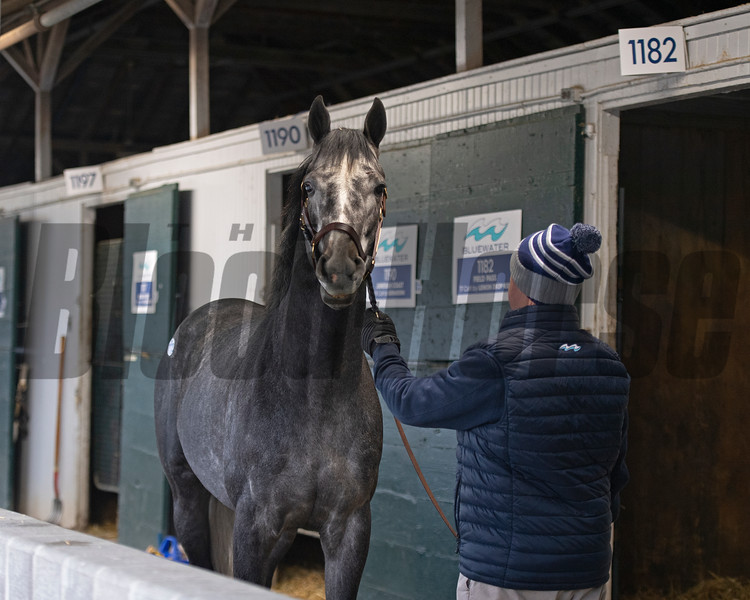 Hip 1182 Field Pass from Bluewater Sales<br /> Keeneland January Sales at Keeneland near Lexington, Ky., on Jan. 12, 2021.
