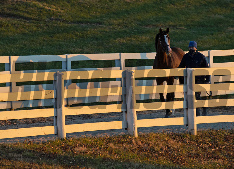 One of the last horses in the sales heads home to his barn. <br /> Keeneland January Sales at Keeneland near Lexington, Ky., on Jan. 14, 2021.