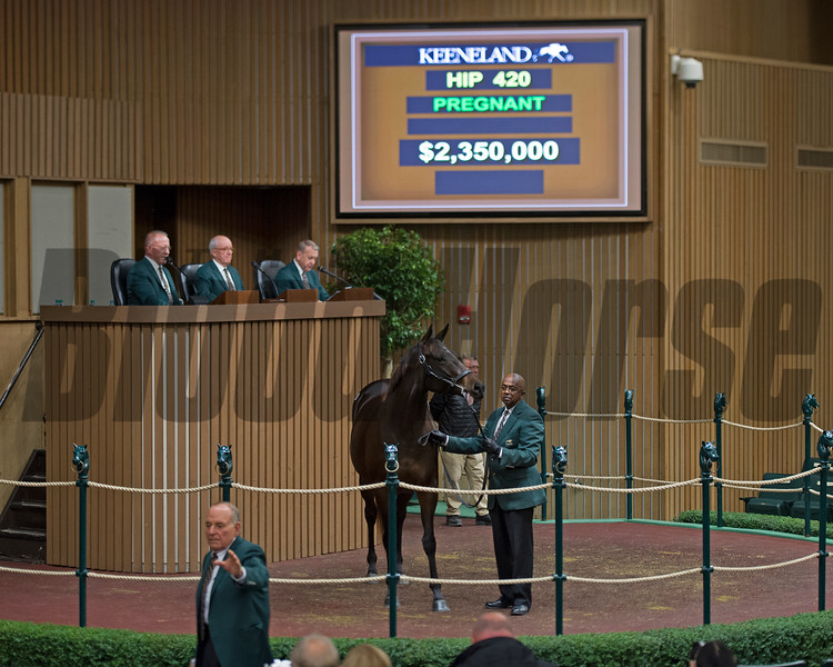 Hip 420 Feathered in foal to War Front brings $2.35M from Summer Wind<br /> Keeneland November Sales on Nov. 9, 2016, in Lexington, Ky.