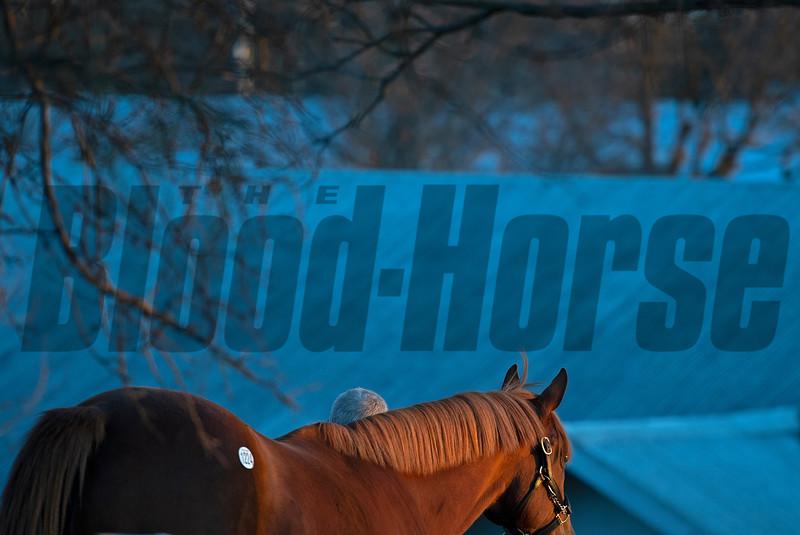sales horse walks back to barn<br /> Keeneland January Sales at Keeneland near Lexington, Ky., on Jan. 14, 2021.