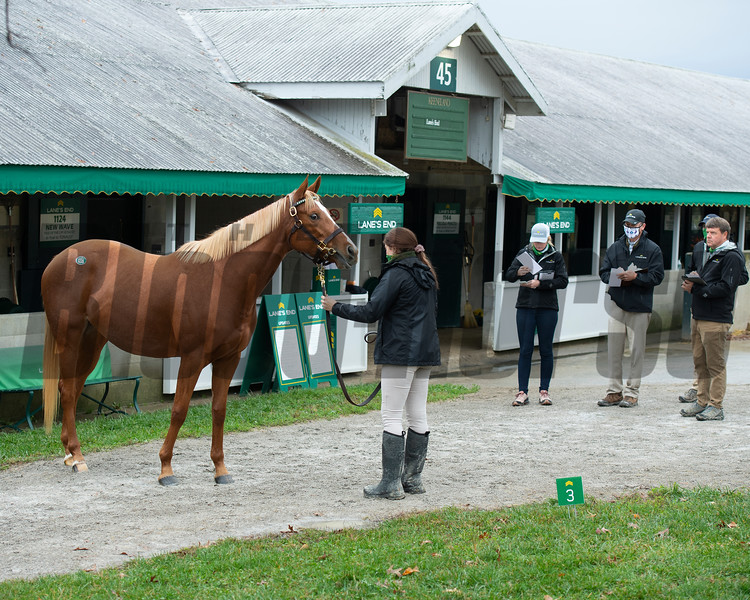 Hip 1226 Tapped Twice gets looked over by Lane's End staff, l-r, Allaire Ryan, Callan Strouss, and Todd Claunch<br /> Sales horses at the Keeneland November Sale at Keeneland in Lexington, Ky. on November 10, 2020.