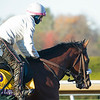 Tiz the Law with Heather Smullen<br /> Breeders' Cup horses at Keeneland in Lexington, Ky. on November 4, 2020.
