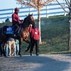 Breeders' Cup entrant The Lir Jet returns from a gallop on the training track at Keeneland Race Course Monday Nov. 2 2020 in Lexington, KY.  Photo by Skip Dickstein