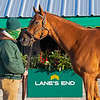 Hip 531 Back Channel, part of the Paul Pompa complete dispersal at Lane's End Farm<br /> Keeneland January Sales at Keeneland near Lexington, Ky., on Jan. 10, 2021.