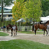scene at Four Star Sales<br /> Keeneland September sale yearlings in Lexington, KY on September 12, 2020.