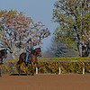 Caption: horses training<br /> Behind the Scenes at Keeneland during Covid19 virus and the people, horses, and essentials needed to take care of race horses on April 2, 2020 Keeneland in Lexington, KY.