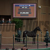 Hip 533 colt by American Pharoah from Mekko Hokte brings $1m from MV Magnier and was consigned by Paramount Sales, agent