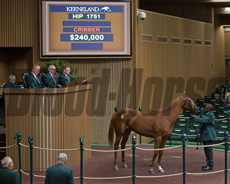 Hip 1751 Moonlight Sky from Denali Stud is bought for $240,000 by Kern Thoroughbreds<br /> Keeneland November Sales on Nov. 13, 2016, in Lexington, Ky.