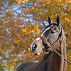 Hip 2724 Projected<br /> on  Nov. 11, 2019 Keeneland in Lexington, KY.