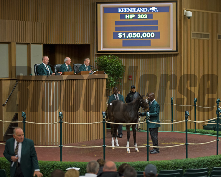Hip 303 colt by Tapit from Hill 'n' Dale and purchased for $1.05Million by Chris Baccari<br /> Keeneland November Sales on Nov. 9, 2016, in Lexington, Ky.