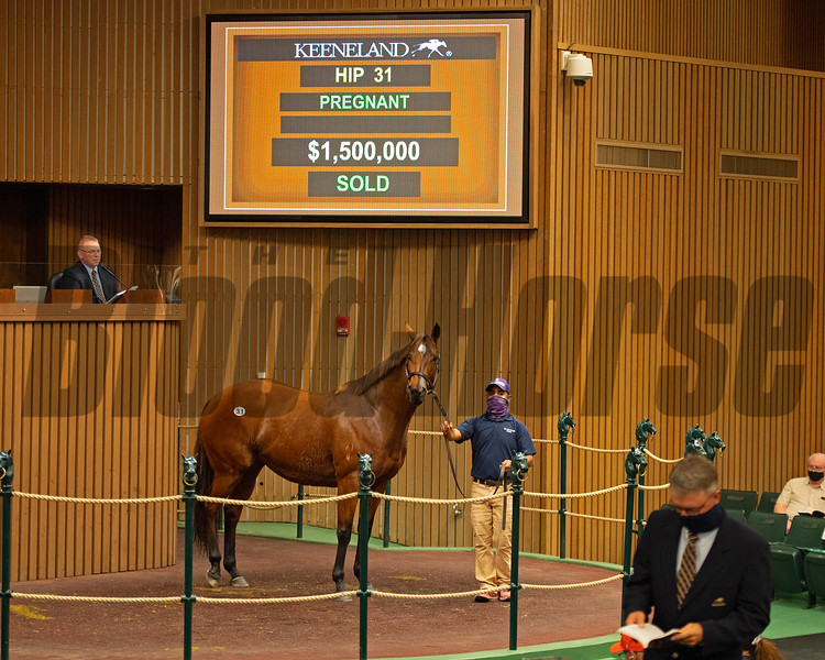 Hip 31 Houtzen from Woods Edge<br /> Sales horses at the Keeneland November Sale at Keeneland in Lexington, Ky. on November 9, 2020.