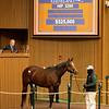 Hip 3295 Hidden Scroll<br /> Sales horses at the Keeneland November Sale at Keeneland in Lexington, Ky. on November 17, 2020.