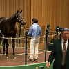 Hip 2001 riddling by Midnight Storm out of Tasunke from Taylor Made for Siena<br /> at Keeneland September sale yearlings in Lexington, KY on September 19, 2020.