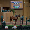 Hip 408 colt by War Front from Drifting Cube from Hill 'n' Dale for $1.45M by M.V. Magnier<br /> Keeneland November Sales on Nov. 9, 2016, in Lexington, Ky.