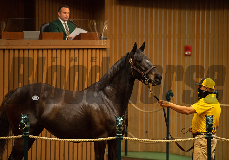 Hip 391 Pollara from Claiborne Farm, agent<br /> Sales horses at the Keeneland November Sale at Keeneland in Lexington, Ky. on November 10, 2020.
