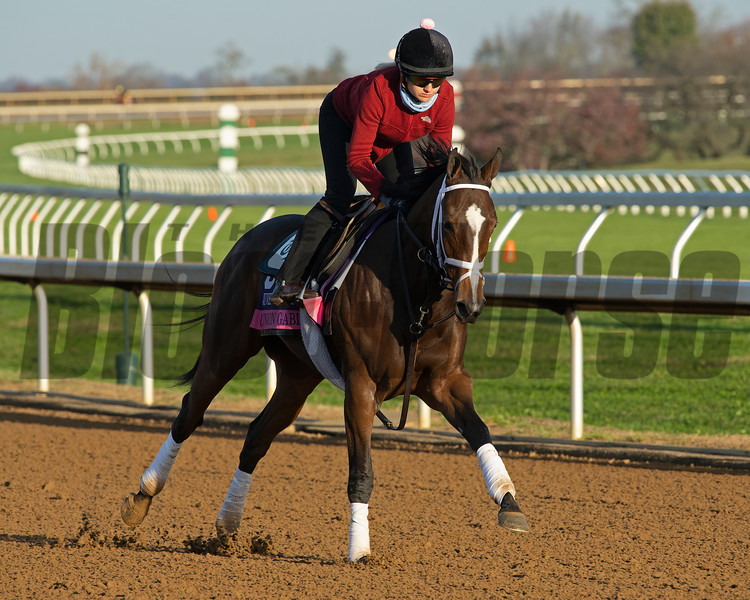 Union Gables<br /> Breeders' Cup horses at Keeneland in Lexington, Ky. on November 5, 2020.