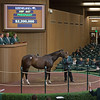 Hip 447 IthinkIsawapudycat brought $2.2M from Greg Goodman with Marette Farrell signing.<br /> Keeneland November Sales on Nov. 9, 2016, in Lexington, Ky.